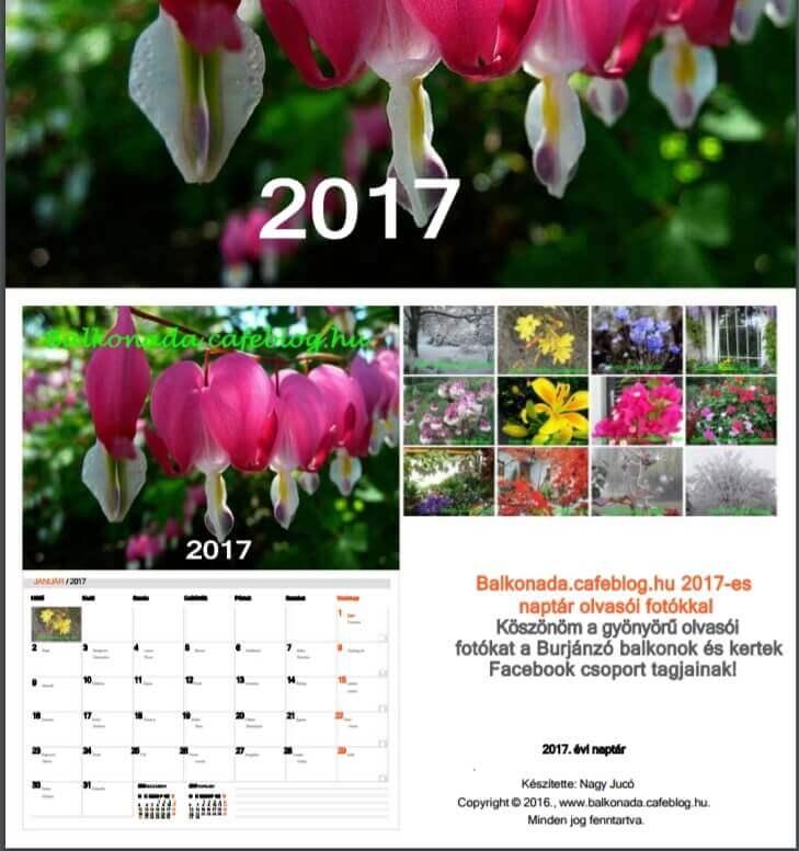 Virágos naptár 2017, A4-es méretű virágos naptár Balkonada olvasók fotóival