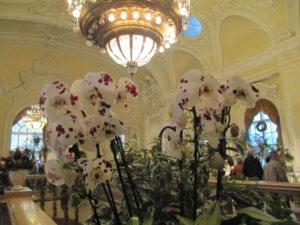 Nyerj páros belépőt az orchidea kiállításra