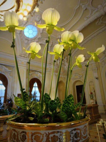 őszi orchidea kiállítás