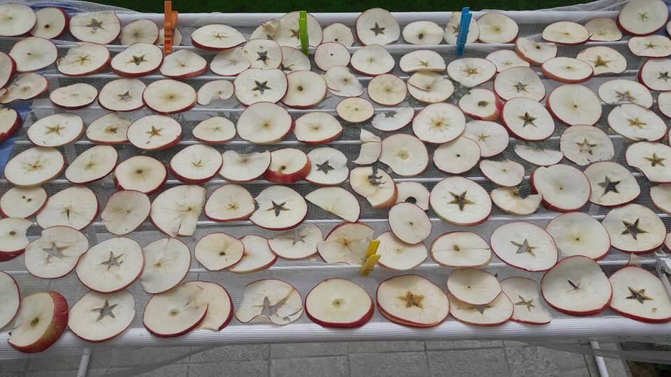 alma aszalás napon, egyszerűen